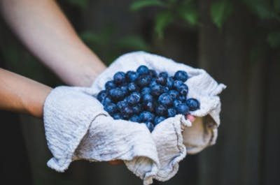 blueberries help stroke recovery