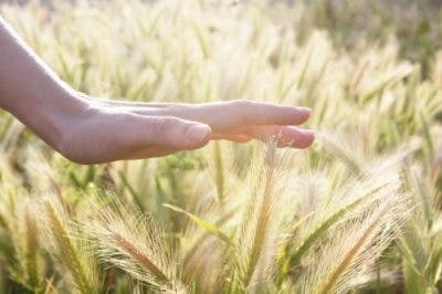 woman touching grain for sensory reeducation after pons stroke