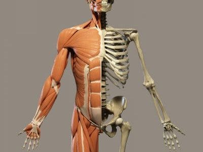 Musculoskeletal pain after spinal cord injury is very common and can occur due to muscle spasms or overuse of bones, joints, or muscles. For treatments, check out FlintRehab.com