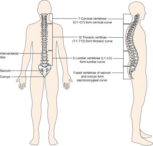 Levels of spinal cord injury: cervical, thoracic, lumbar, sacral