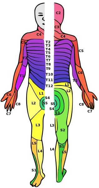 Dermatomes for spinal cord injury