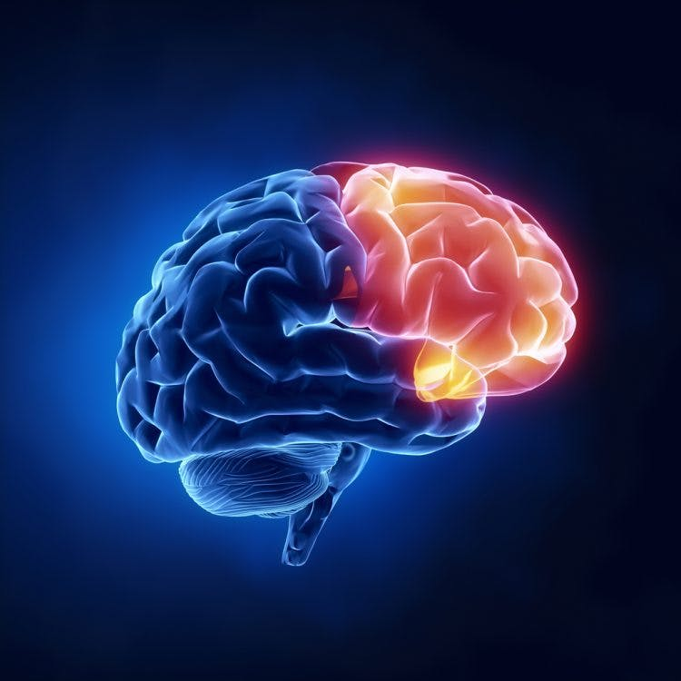The Ultimate Guide to Frontal Lobe Brain Injury Recovery