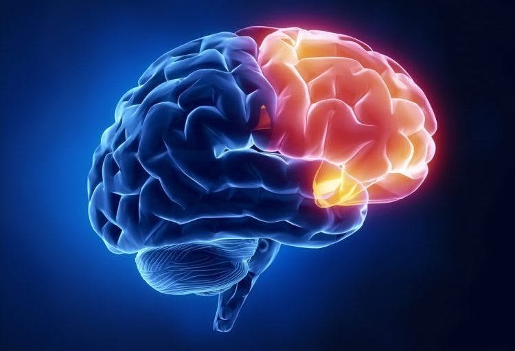 understanding frontal lobe brain injury