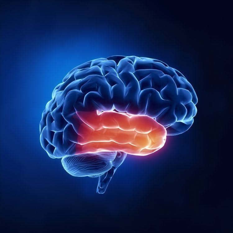 The Ultimate Guide to Temporal Lobe Damage