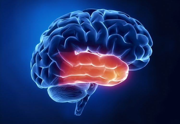 understanding temporal lobe damage