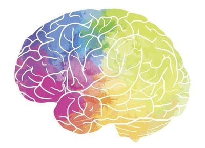 colorful illustration of brain to highlight different areas