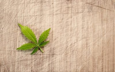 marijuana natural remedy spinal cord injury