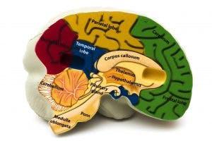 The ultimate guide to cerebellum brain damage