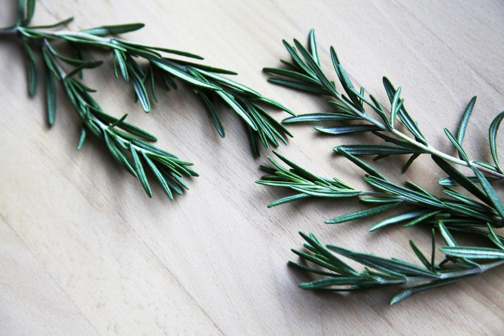 rosemary leaves used in essential oils for brain injury