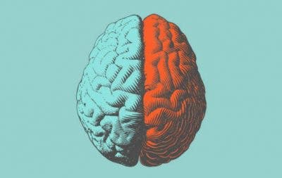 hemispheres of the human brain colored blue and red