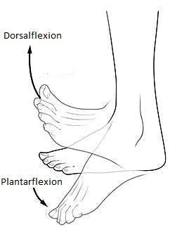 Darstellung der Dorsalflexion und wie sie die Schlaganfallnebenwirkung des Fußtropfens erzeugt