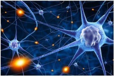 illustration of nerve cells in the brain