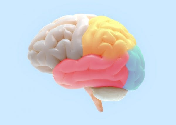 3D model of human brain on light blue background with parietal lobe highlighted in yellow to represent parietal lobe damage