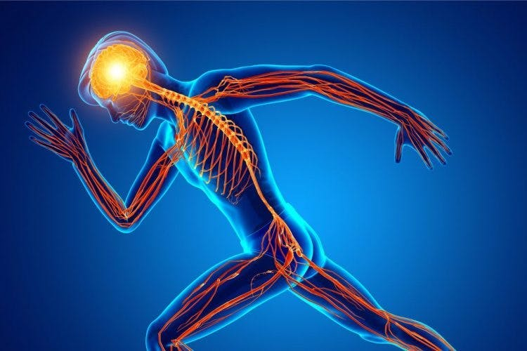 spinal cord injury levels and their peripheral nerves