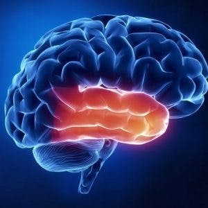 effects of temporal lobe damage