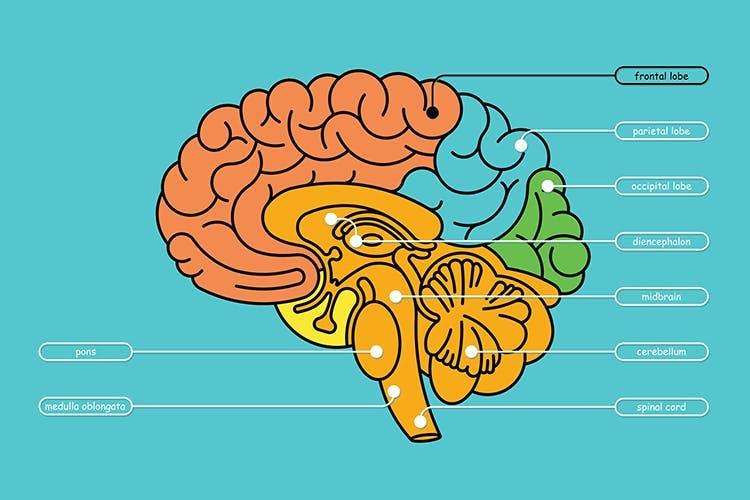 colorida ilustración de la anatomía del cerebro destacando un ACV del lóbulo frontal