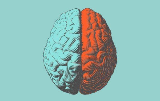 El accidente cerebrovascular del lóbulo parietal tendrá varios efectos según el lado del cerebro afectado