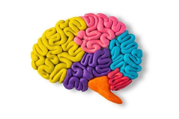 Tonmodell des Gehirns zur Veranschaulichung der Erholung von Kleinhirninfarkten