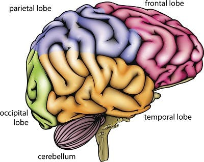 diagram of brain anatomy to show which functions may be affected by coup-contrecoup brain injury