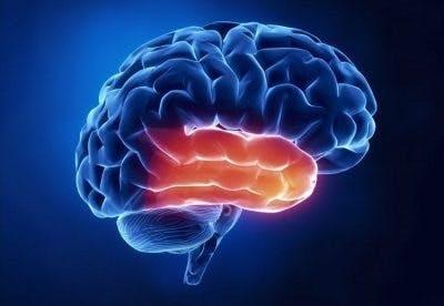 Ilustración del cerebro con el lóbulo temporal resaltado en rojo