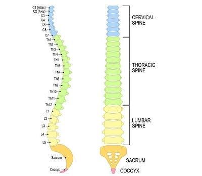 illustration of levels of sci